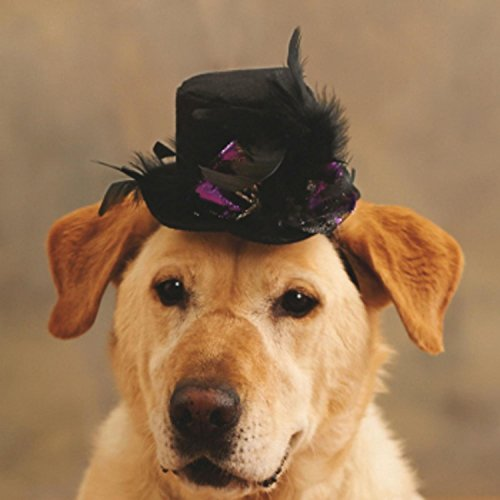 3-black-silver-and-metallic-spider-accented-top-hat-pet-animal-halloween-costume