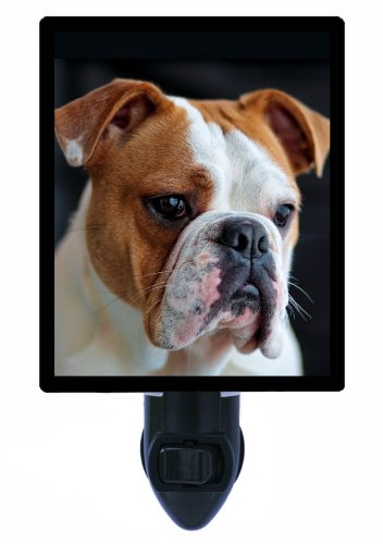 Dog Night Light - English Bulldog (Bulldog Night Light compare prices)