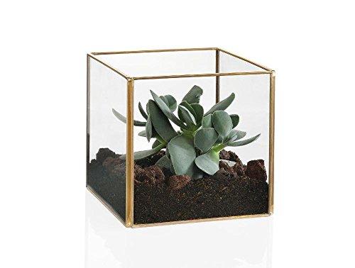 Andrea-house-ax15180-Terrarium-quadratisch-gold-12-x-12-x-12-cm
