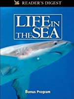 Wondrous Secrets of the Ocean Realm: Life in the Sea
