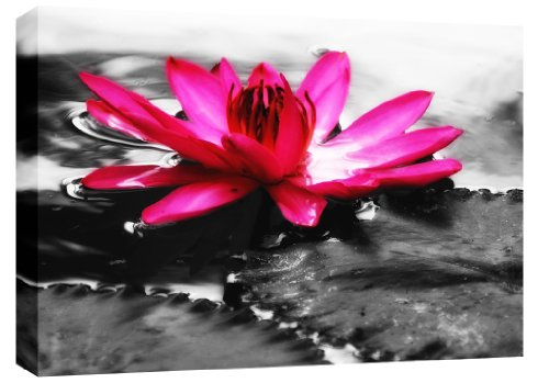 LARGE WATER LILY FLORAL CANVAS ART PINK FLOWER ON WATER (black and white) mounted and ready to hang 30 x 20 inches (76 x 52 cm) by Canvas Interiors