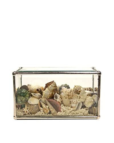 Contrast, Inc. Rectangular Seashell Terrarium