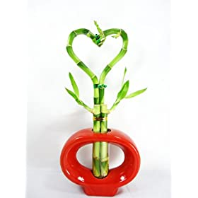 Lucky BambooHeart Style with Hollow Ceramic Vase