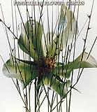 FLOWER CIRCUS(初回限定盤)(CCCD)