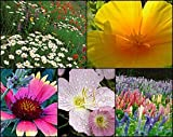 Search : California Central Valley Wildflower Seed Mix - 1&#47;4 LB