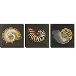 Seashell I, II, & III by Patricia Pinto 3-pc Premium Gallery Wrapped Canvas Giclee Art Set (Ready-to-Hang)