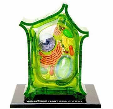 Famemaster 4D-Science Plant Cell Anatomy Model (Plant Cell Model compare prices)