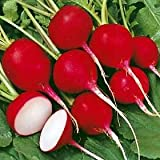 Seeds and Things Organic Cherry Belle Radish 300 Seeds (23 days) ASA AWARD WINNER Fresh Pack Easy to Grow