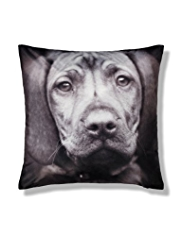 Velvet Dog Print Cushion