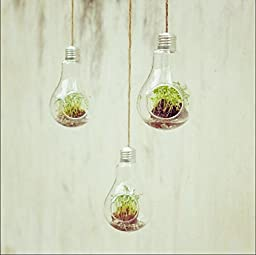 Mkono 3 Pack Light Bulb Hanging Plant Terrarium Glass Vase for succulent & air plant