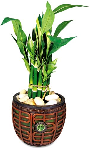 Nu-Dell T7476 Artificial Lucky Bamboo in Mahogany Jade Container, 16″ Overall Height