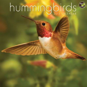 41Je Siu3YL Hummingbird Calendar 