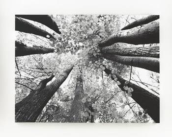 Vintage Ashley Furniture A Ananya Tree Tops Gallery Wrapped Canvas Wall Art Black White ue ue