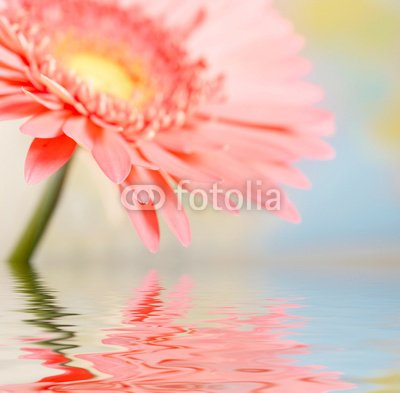 """Wallmonkeys Peel and Stick Wall Decals - Pink Daisy-gerbera with Soft Focus Reflected in the Water - 18""""W x 18""""H Removable Graphic"""