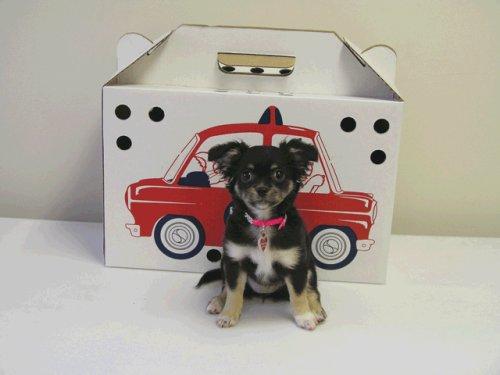 Cheap Kitty Kab Pet Carrier (J133)