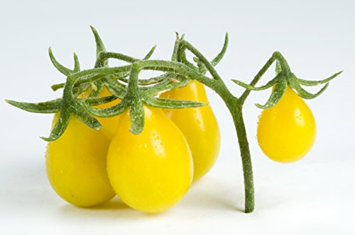 500mg Organic Yellow Pear Tomato Seeds Non-GMO Heirloom Variety (Tomato Seeds Yellow Pear compare prices)