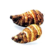 料亭を思わせる上品な味わい えび芋 300g(里芋種)