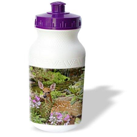 Wb_90390_1 Danita Delimont - Deer - White-Tailed Deer Fawn, Louisville, Kentucky - Us18 Aje0388 - Adam Jones - Water Bottles front-232560