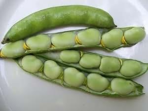30 Heirloom Fava bean Broad Windsor Seeds by Stonysoil Seed Company