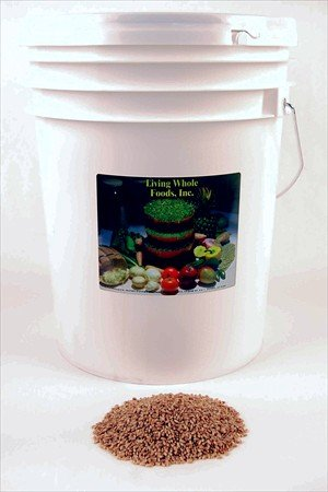 Organic Hard Red Wheat Seed- 35 Lbs- Plant & Grow Wheatgrass, Grind to Make Flour & Bread, Emergency Food Storage Seeds