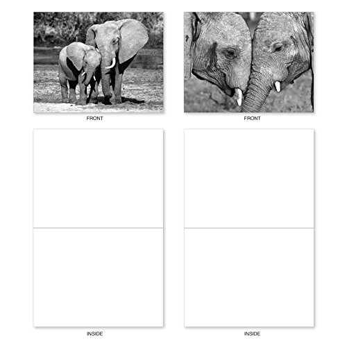 M2370OCB Trunks Of Love: 10 Assorted Blank All-Occasion Note Cards Featuring Sweet and Loving Elephant Couples Holding Each Others Trunks, w/White Envelopes.