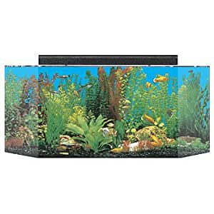 Seaclear 26 gal flat back hexagon acrylic for 20 gallon hexagon fish tank
