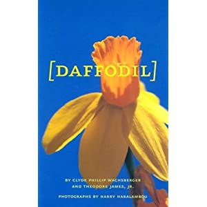 All About Daffodils