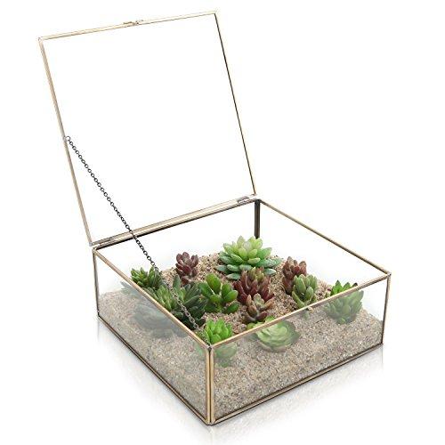 Vintage Brass & Clear Glass Decorative Box / Plant Terrarium Display / Jewelry Organizer w/ Latching Lid