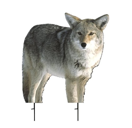 Montana Decoy Kojo Coyote Decoy