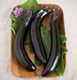 Eggplant Orient Express D354e (Purple) 25 Hybrid Seeds by David's Garden Seeds