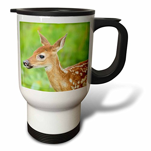 3dRose Danita Delimont - Animals - USA, Minnesota. Close-up of White-tailed deer fawn. - 14oz Stainless Steel Travel Mug (tm_231038_1)