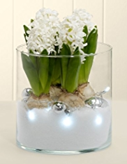 Hyacinth & Bauble Glass