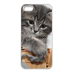 Amazon.com: Cute Gray Hairy Kitten Cat Kitty Phone Case for Iphone 5s