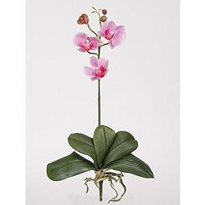 Mini Phalaenopsis Silk Orchid Flower w/Leaves (6 Stems)
