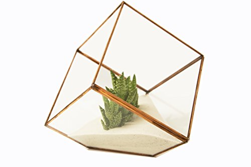 Glass Terrarium Cube With Rose Gold Trim By Oh So Relevant Faceted