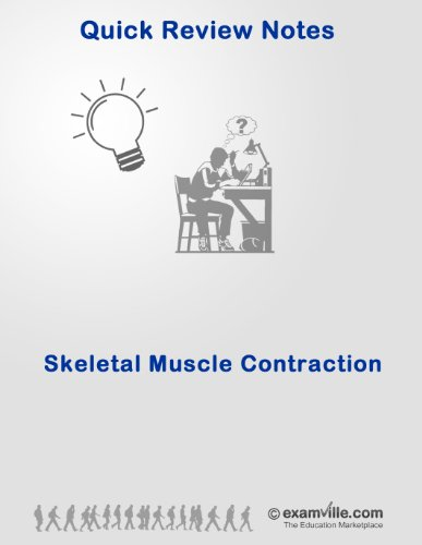 Quick Review: Skeletal Muscle Contraction (Quick Review Notes) PDF