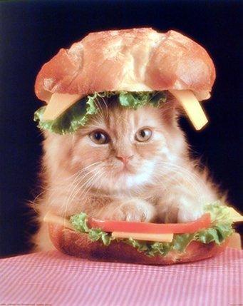 Cute Kitten Cat Poster