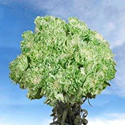 Saint Patrick\'s Day Green Carnations | 200 Saint Patrick\'s Green Carnations