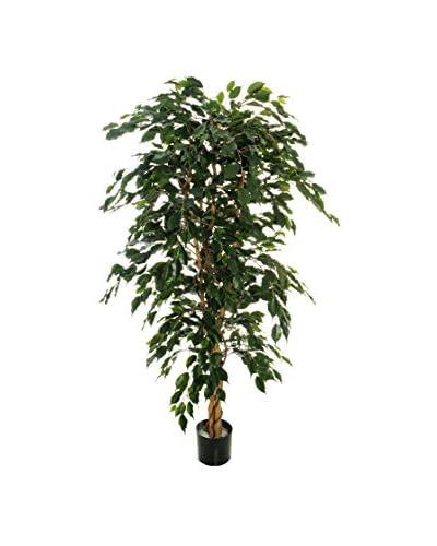 Ficus Artificial