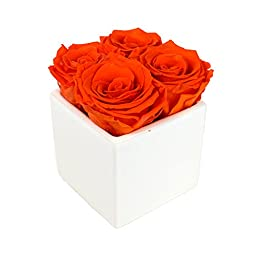 Luxe Bloom Home Collection | 4 Tangerine Preserved Roses in a 3"|256|256|?|en|2|e43074efe576b6f701694967bf0af4d4|False|UNLIKELY|0.3059222400188446