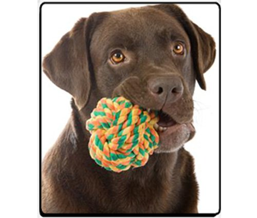 Chocolate Labrador Retriever Dog with Toy Computer Mouse Pad