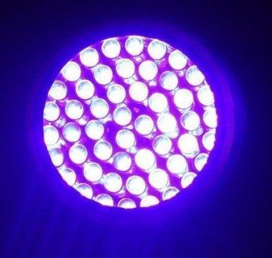 Ggi 395 Nm 51 Uv Ultraviolet Led Flashlight Blacklight 3 Aa Cree395