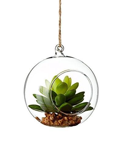Sage & Co. Organic Glass Succulent