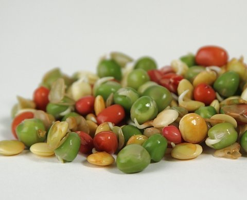 Crunchy Mix Of Sprouting Bean Seeds (5 Pounds) (Ingredients: Green Pea, Adzuki, Lentil, Garbanzo) To Grow Sprouts Or For Cooking