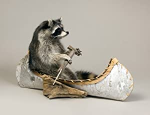 Raccoon Canoeing Taxidermy Mount