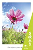 PC-78-5 [ 5枚入り ] 花 はがき ポストカード コスモス ( 秋桜 )