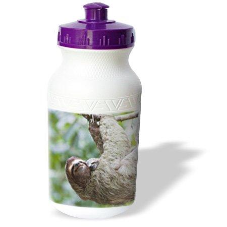 Zebra Baby Shower Supplies front-1072194
