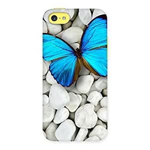 Special Awesome ButterFly Multicolor Back Case Cover for iPhone 5C