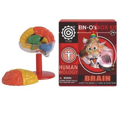 EIN-O's Human Brain Box Kit - 1
