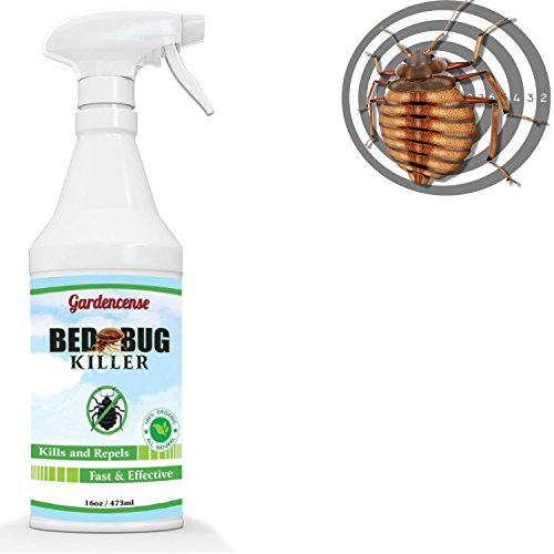 Better Than Bed Bug Killer